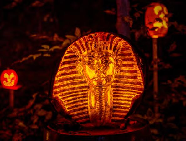 Synopsis Imagine the flickering glow of more than 5,000 artfully carved Jack O Lanterns depicting people, places and scenes from popular culture - all crafted with painstaking detail and amazing