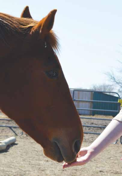 OFFICER SAFETY CORNER Equine-Assisted Learning Resiliency Classes to Reduce PTSD and Stress the brain is not engaged in the threat, as evidenced by studies.