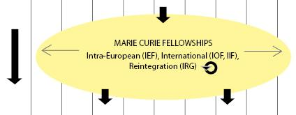 Marie Curie young researcher definition