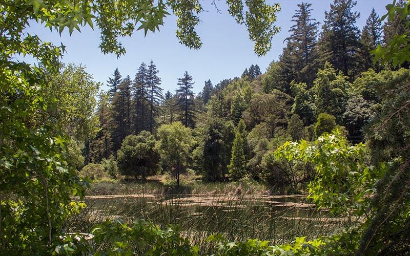 Request for Qualifications and Proposals (RFQP) for Design Consulting Services for the Webb Creek Bridge Replacement Project, Bear Creek Redwood Open Space Preserve Midpeninsula Regional Open Space